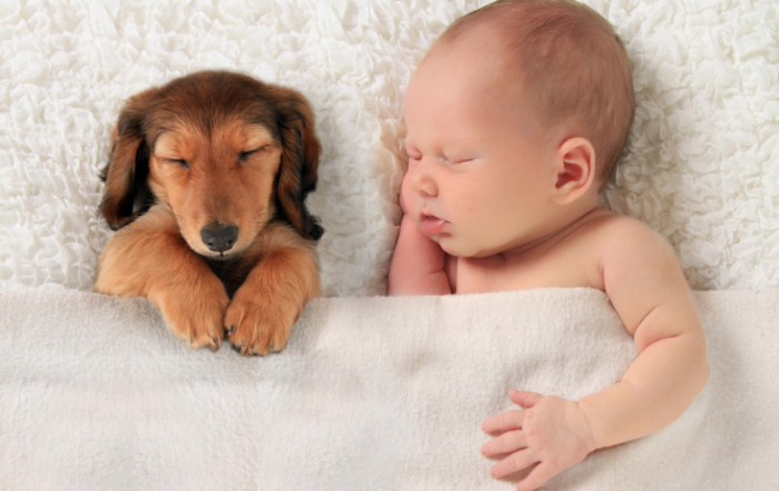 Las mascotas y la llegada del bebé